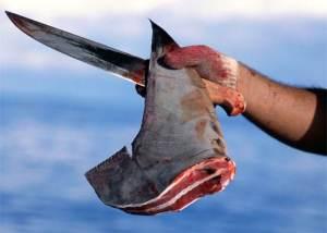 cut-shark-fin