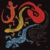 Salamander Longshanks - breed them out