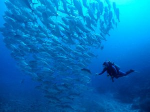 Marine protected areas: do they work?