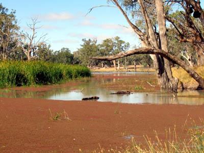 Murray River Conservationbytes Com