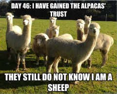 Undercover-Sheep-Meme