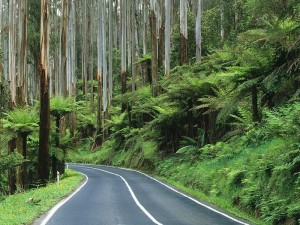 Yarra-Ranges-National-Park-Australia