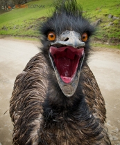 Speaking Emu