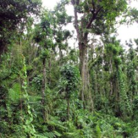 Quantity, but not quality - slow recovery of disturbed tropical forests