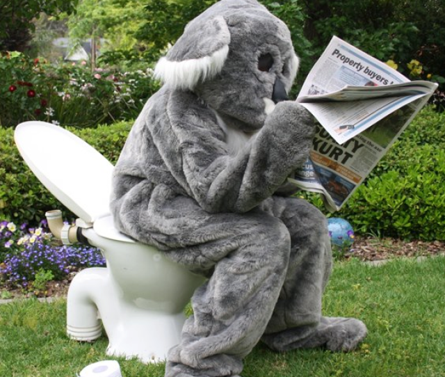 How To Tell If A Koala Has Been In Your Garden Great Koala Count