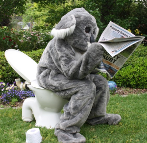 How to tell if a koala has been in your garden. © Great Koala Count