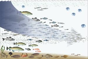 Fishing_down_the_food_web