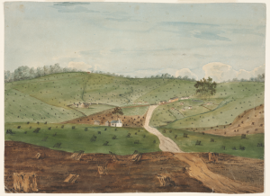 Clearing for Agriculture in Early Settlement (Anon.). Courtesy Mitchell Library, State Library NSW