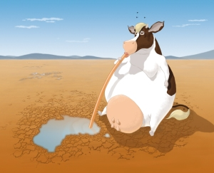 cow_drinking_australia_dry
