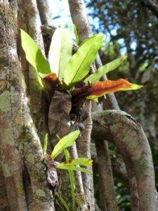 Ferns in Queensland, Australia by Claire Wordley