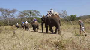 A little ride on the stars to complete the experience (that's us with Anton on the back of Tembo following the queue)