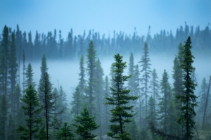 A view of the Waswanipi-Broadback Forest in the Abitibi region of Northern Quebec, one of the last remaining intact Boreal Forests in the province (source: EnergyDesk).