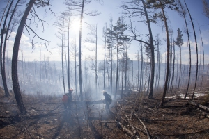 Forest fires in Zabaikalsky region, Siberia, Russia. This land suffered from wildfires for years.
