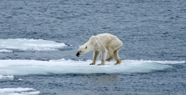 cb_climatechange2_polarbears_photo2