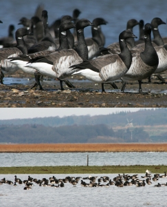 CB_ClimateChange5_BirdLateMigratoryArrival_Photo