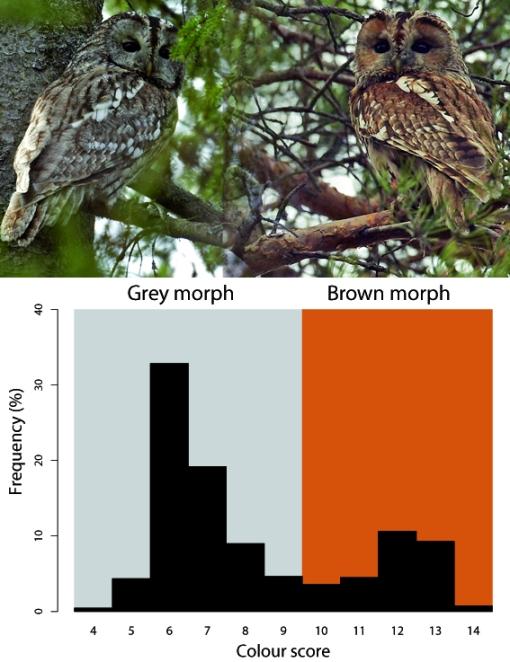 CB_Quercus35_Owl microevolution_Figure1