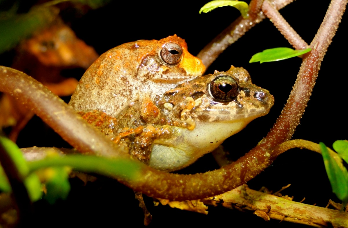Microclimates: thermal shields against global warming for small herps