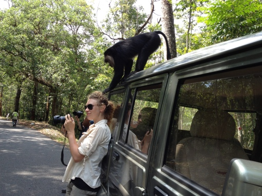 Claire Wordley investigated by lion-tailed macaque Valparai India - Divya Mudappa