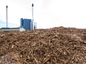 bioenergy3