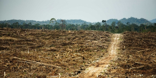 oil palm destruction