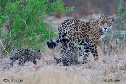 Kaayana & kittens