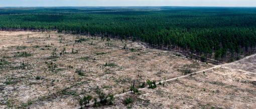 img-cleared-pine-plantations-western-australia-1400x600