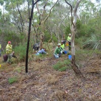 We need a Revegetation Council