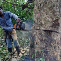 Increasing human population density drives environmental degradation in Africa