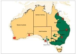 present koala distribution