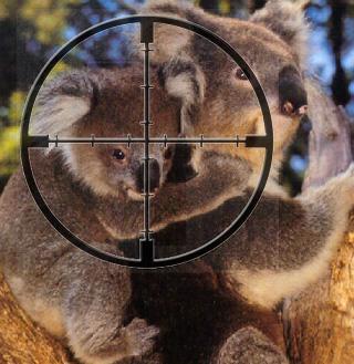 koalacrosshairs